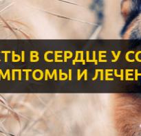 Симптомы и лечение сердечных глистов или червей у собак. Глисты в сердце у собак