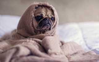 Как выводятся глисты у собак. Глисты у собак: проблема заражения и способы защиты от гельминтов