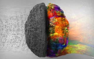 Тест на проверку доминирующего полушария мозга. Тест на определение ведущего полушария мозга