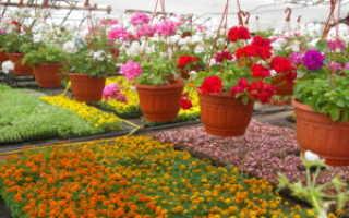 Однолетние цветы на клумбе. Какая рассада цветов лучше подходит для украшения огорода