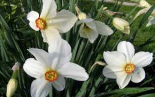 Выбираем белые цветы для сада. Белые цветы – фото. Садовые растения с белыми цветками