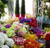 Свой бизнес: как открыть зоомагазин. Бизнес на изготовлении искусственных цветов