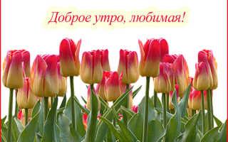 Как красиво сказать с добрым утром. Пожелания доброго утра любимой девушке своими словами