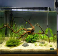 Как правильно запустить новый аквариум? Основные правила запуска аквариума с нуля