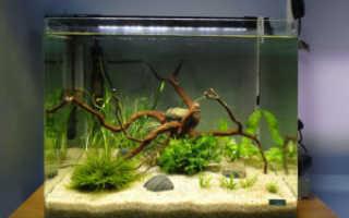 Как правильно запустить ваш первый аквариум. Как запустить аквариум в первый раз