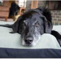 Почему у собаки шерсть выпадает клочками. Что делать если выпадает шерсть у собаки