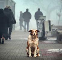 O Бездомные животные – проблемы всех и каждого. О проблеме бездомных животных