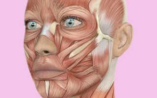 Способы омоложения кожи. Омолаживаем кожу лица самыми эффективными способами в домашних условиях
