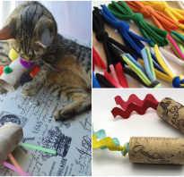 Игры для кошки своими руками. Игрушки для кошек из шерсти. Изготовление интерактивной игрушки