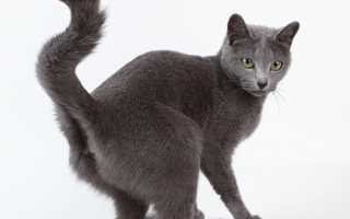 Кошка брызгает из под хвоста. Непростое параанальное воспаление у кошки — опасная патология