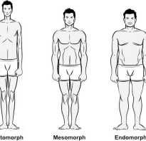 Внутреннее телосложение человека. Краткое руководство про типы телосложения мужчин