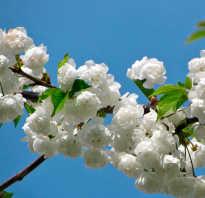 За что я люблю весну в прозе. Сочинение на тему «Почему я люблю весну. Сочинения по темам