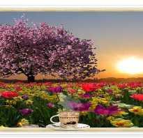 Пожелание доброго утра любимой девушке. Пожелания доброго утра девушке в стихах очень красивые
