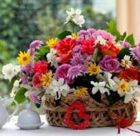 Дарит цветы девушке огромный букет. Как выбрать цветы для девушки. Если дарить девушке Гербу