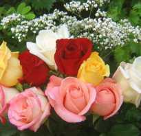 Цветы букеты роз. Самые красивые букеты цветов и не только! Когда и кому дарить розы