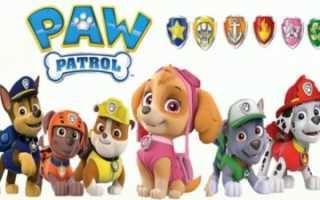 Сколько собак в щенячьем патруле. Отзыв: Как зовут щенков из «Щенячьего патруля»