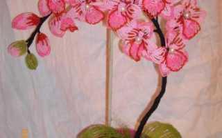 Орхидея из бисера схемы плетения пошагово. Орхидея из бисера.Работы мастера и МК