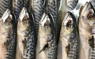 Можно ли слабосоленую рыбу беременным. Польза рыбы при беременности и правила ее употребления