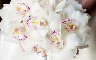 Огромные букеты цветов. Красивые, оригинальные и необычные букеты и композиции из живых цветов