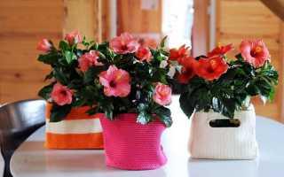 Самые желаемые подарки на 8 марта. Видео: что подарить маме, бабушке, сестре — идеи для женщин