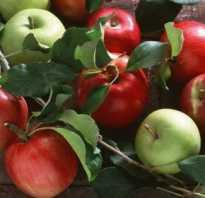 Праздник яблочный спас. История праздника Яблочный Спас (Преображение Господне)