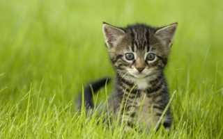 Какие имена для котов. Как выбрать имя для котёнка-мальчика любой породы и цвета