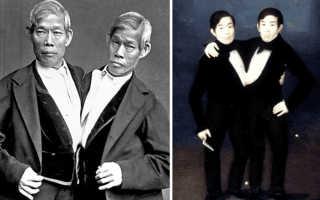 Неразделимая жизнь. Жизнь сиамских близнецов Чанга и Энга (7 фото) Чанг и энг банкеры биография