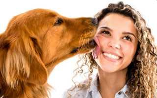 Что происходит, когда собака облизывает ваше лицо. Почему собака лижет хозяину руки, ноги и лицо
