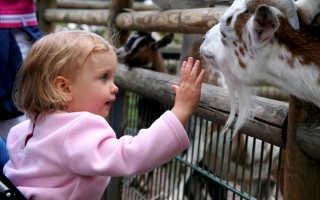 Можно ли давать козье молоко детям до года? Коровье и козье молоко грудничкам и детям