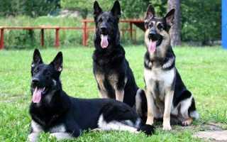 Дрессировка собак в домашних условиях. Простые правила и приемы. Дрессировка собак